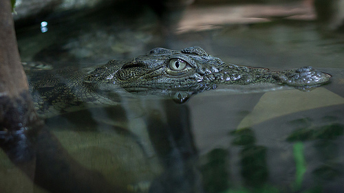 Crocodiles kill tourist in Zimbabwe