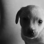 4312211060_ece571ac07_puppy-rescue