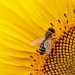 e833b50c2ffd053ecd0b470de7444e90fe76e7d61bb217449df4c2_640_bees