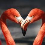 ef35b10d28f11c3e81584d04ee44408be272e1d119b1104595f1_640_flamingo