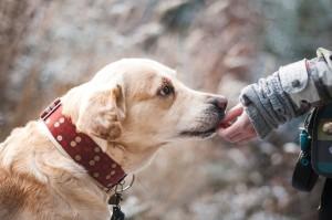 dogs, pets [pixabay photo]