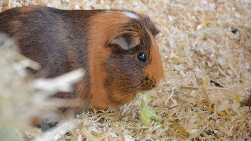 Hamster tests show masks reduce coronavirus spread per scientists