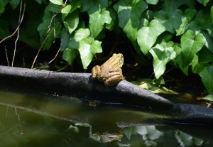 frog [Photo by Jan Haerer on Unsplash]