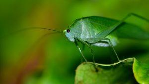 locust [Photo by Juan Pablo Mascanfroni on Unsplash]