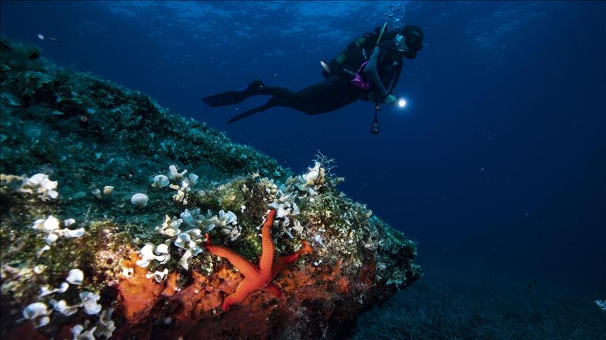 coral reefs [Anadolu photo]